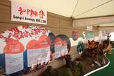 Yangyang Pine Mushrooms Festival