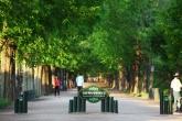 Metasequoia Road in Damyang