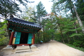 Woljeongsa Needle Fir Forest