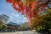 Baegyangsa Temple