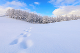 Snow Scenery of a Sheep Ranch