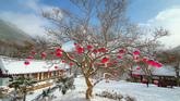 Lotus Lantern Flowers Blooming in Winter
