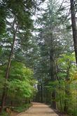 월정사 전나무숲