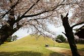 Daereungwon Park(Tomb Cheonmachong)