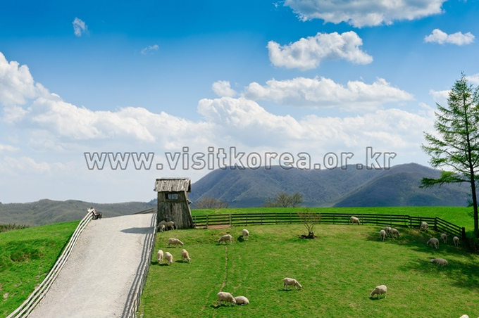 Daegwallyeong Ridge