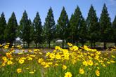 Damyang View