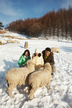 Family Experience Tour, Daegwallyeong Ranch(Samyang Ranch)