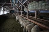 Daegwallyeong Sheep Ranch