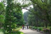 Cheollipo Arboretum