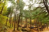Cheongtaesan National Recreational Forest