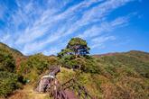 Cheonnyeonsong Pine Tree in Jirisan Mountain