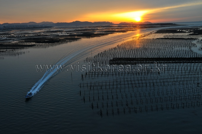 Waterway of an Oyster Farm