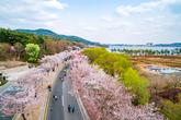 경주벚꽃마라톤대회