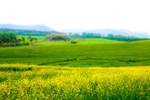Gochang Green ..