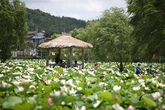 한국의 축제