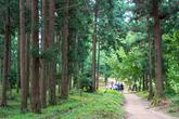 Cypress Forest Woodland