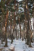 Chodang village Forest