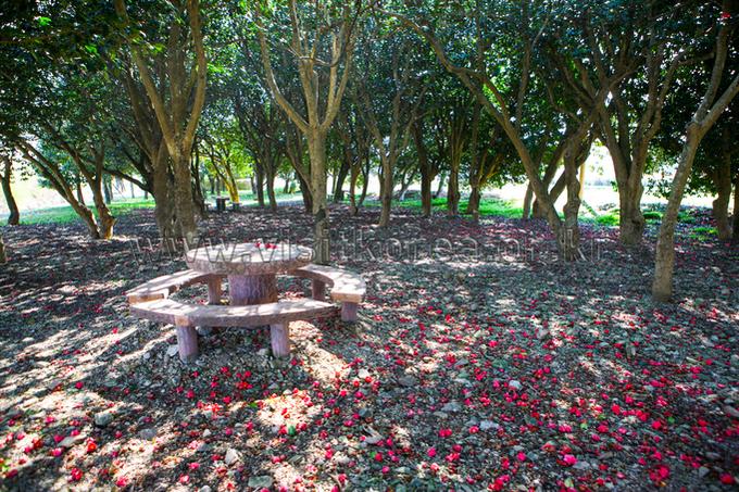 Jangheung Mukchon-ri Camellia Forest