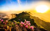 계룡산의 봄 소나타