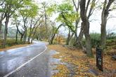 보성 용추마을숲