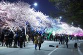 Yeouido Spring..