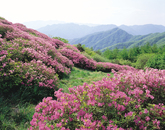 Mt. Jirisan in Spring 