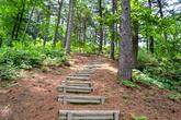 Pocheon Healing Forest
