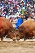 Chongdo Bull's..