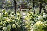 Haenam Forest(4est) Arboretum