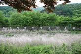 Mungyeongsaejae Eco Park