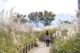서울 하늘공원