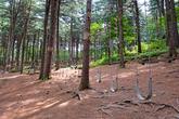 포천 하늘아래 치유의 숲