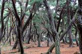 Three Royal Tombs in Bae-dong, Gyeongju(Three Royal Tombs in Bae-ri)