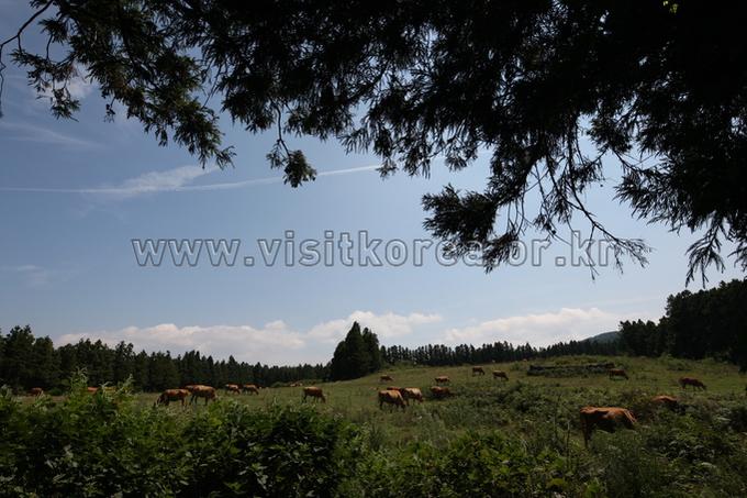 Jeju Pureun Ranch