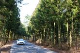 Bijarim Forest Road(1112 Road)