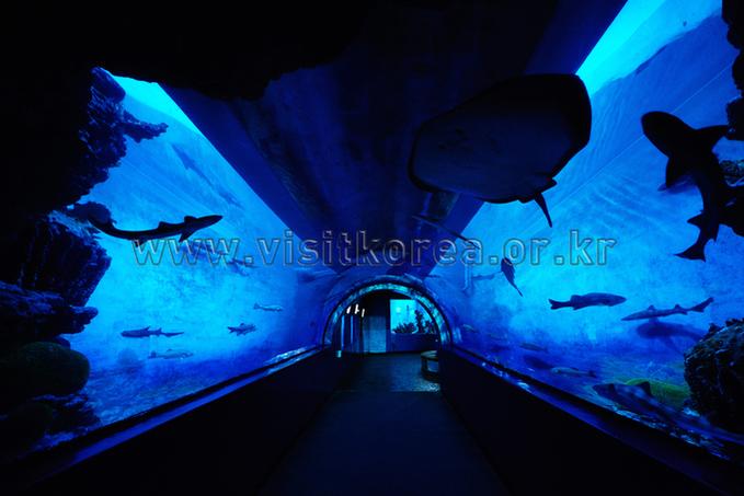 Hwajipo Aquarium