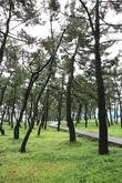 Gyeongpo Beach