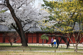 Changgyeonggun..