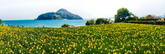 A Yellow Sea on Gonggoji