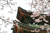 Changgeyonggun..