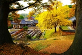 Fall at Myeongjae House