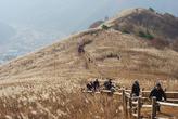 Reeds Field
