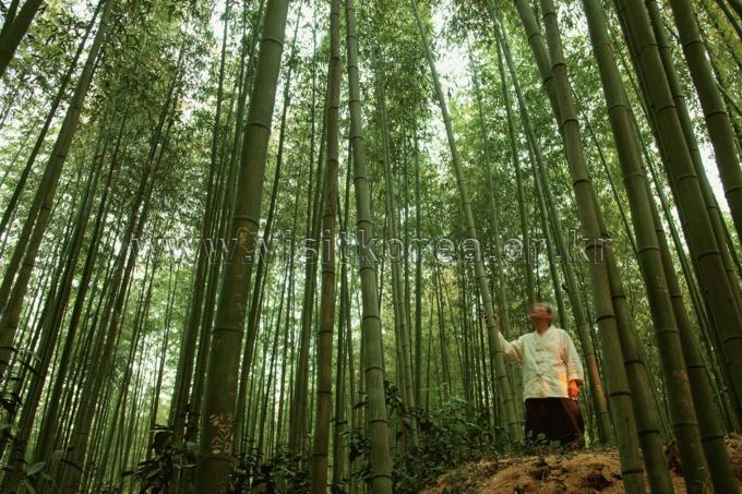 Juknokwon(Bamboo Park)