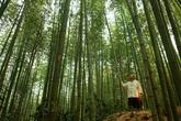 Juknokwon(Bamb..