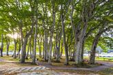 남원 서어나무숲