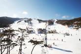 Phoenix Park Ski Resort , Winter Sports