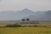 Pyeongsari Field