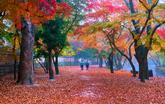 가을 선운사