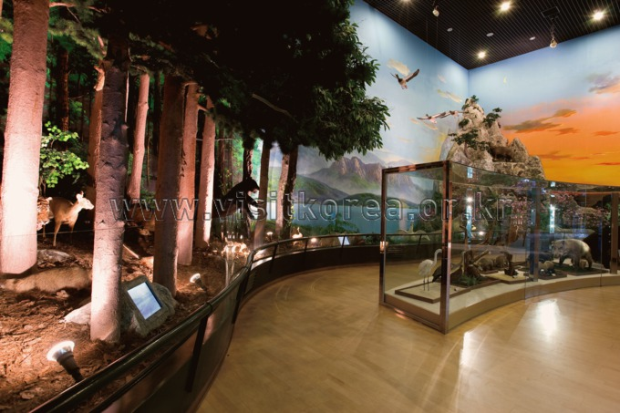 Forest Museum in Chuncheon