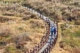DarkmurCoastal Trail
